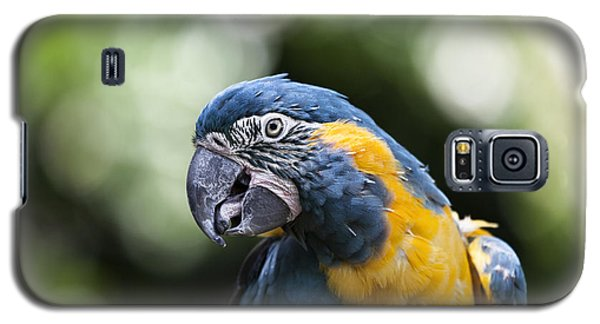 Blue And Gold Macaw V5 Galaxy S5 Case by Douglas Barnard
