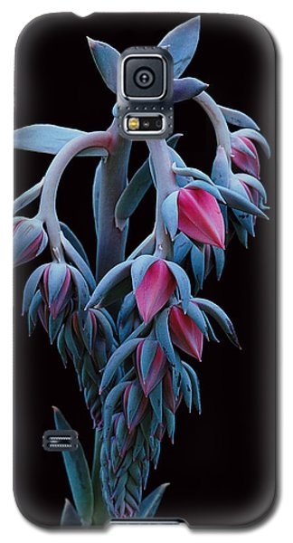 Blue And Pink Succulent Galaxy S5 Case
