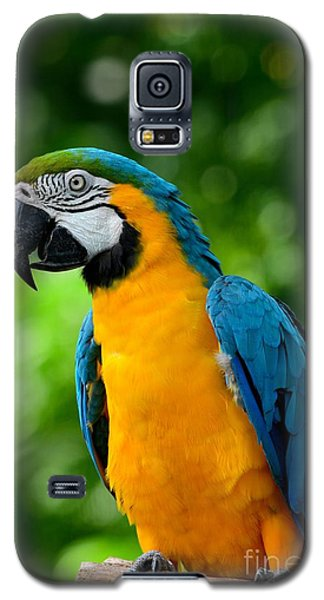 Blue And Yellow Gold Macaw Parrot Galaxy S5 Case