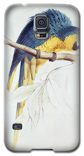 Macaw Galaxy S5 Case - Blue And Yellow Macaw by Edward Lear