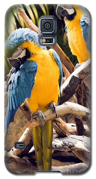 Blue And Yellow Macaw Pair Galaxy S5 Case by Darleen Stry