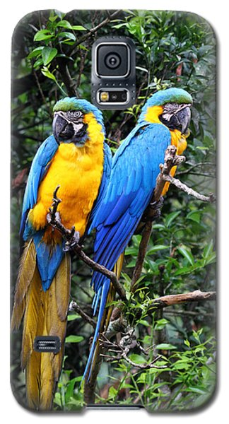 Blue And Yellow Macaws Galaxy S5 Case