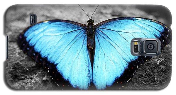 Blue Angel Butterfly 2 Galaxy S5 Case