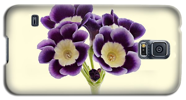 Galaxy S5 Case featuring the photograph Blue Auricula On A Cream Background by Paul Gulliver