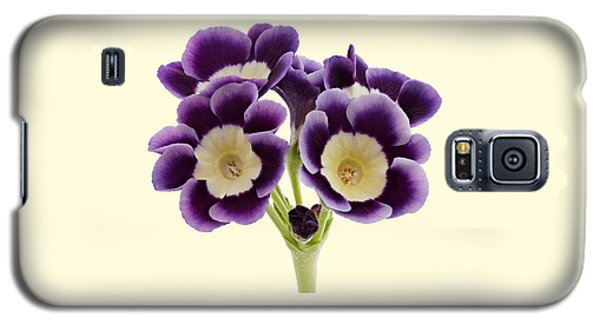 Blue Auricula On A Cream Background Galaxy S5 Case by Paul Gulliver