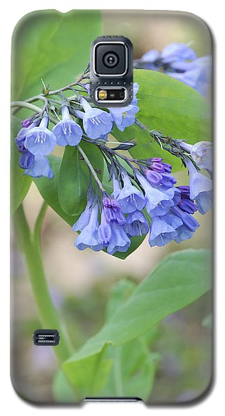 Galaxy S5 Case featuring the photograph Blue Bells Of Lapsley's Run by Phyllis Peterson