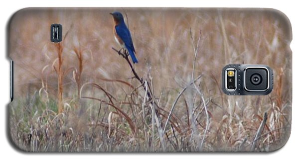 Galaxy S5 Case featuring the photograph Blue Bird by Mark McReynolds