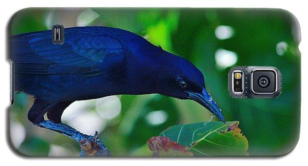 Blue-black Black Bird Galaxy S5 Case
