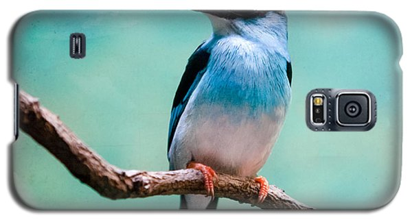 Blue Breasted Kingfisher Galaxy S5 Case