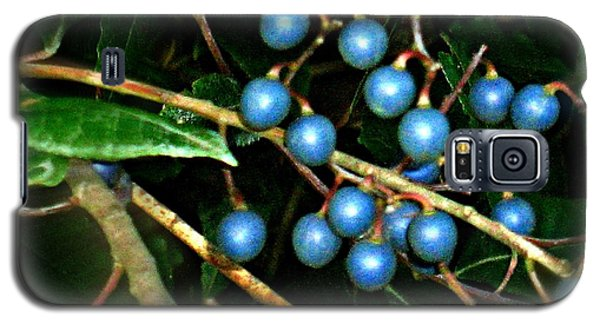 Galaxy S5 Case featuring the photograph Blue Bush Berries  by Leanne Seymour