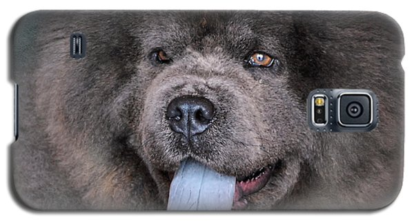 Blue Chow Chow Galaxy S5 Case