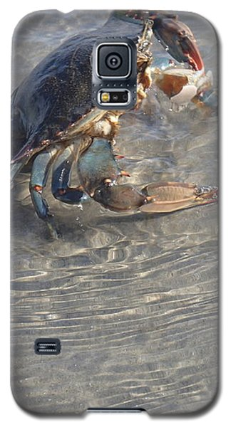 Galaxy S5 Case featuring the photograph Blue Crab Chillin by Robert Nickologianis