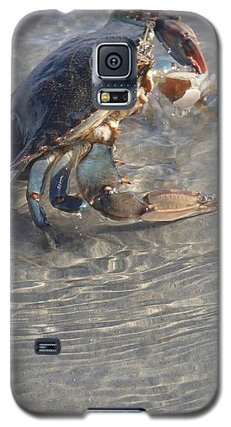 Blue Crab Chillin Galaxy S5 Case by Robert Nickologianis