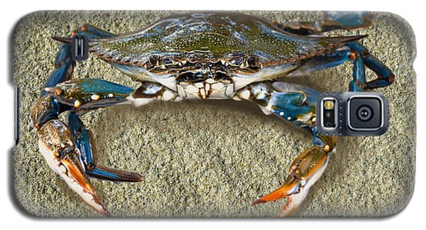 Blue Crab Confrontation Galaxy S5 Case by Sandi OReilly