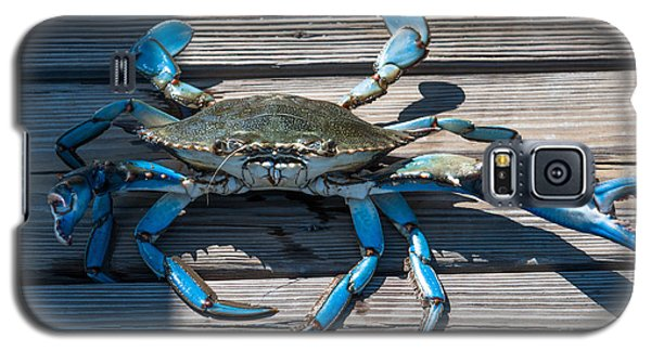 Blue Crab Pincher Galaxy S5 Case