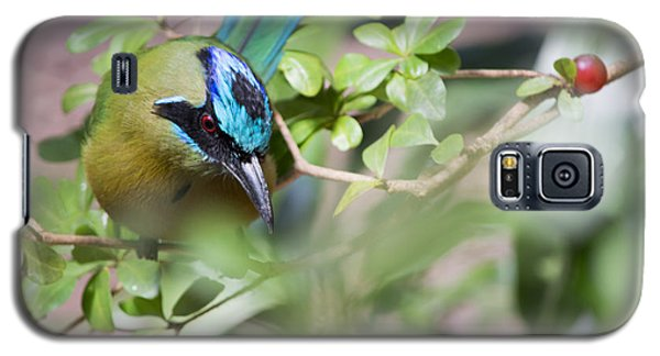 Galaxy S5 Case featuring the photograph Blue-crowned Motmot by Rebecca Sherman