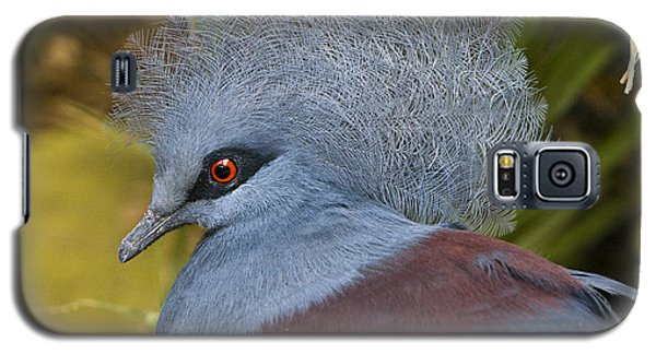 Blue-crowned Pigeon Galaxy S5 Case by David Millenheft