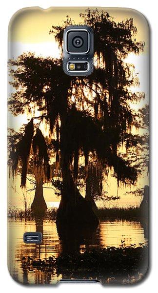 Blue Cypress Yellow Light Galaxy S5 Case by Paul Rebmann