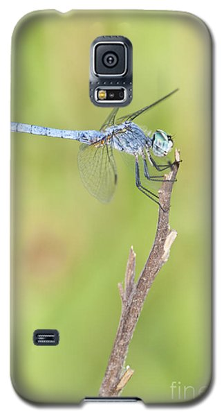 Galaxy S5 Case featuring the photograph Blue Dasher by Bryan Keil