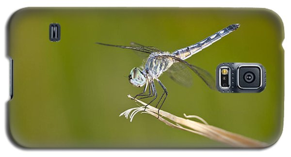Galaxy S5 Case featuring the photograph Blue Dasher On The Edge by Bryan Keil