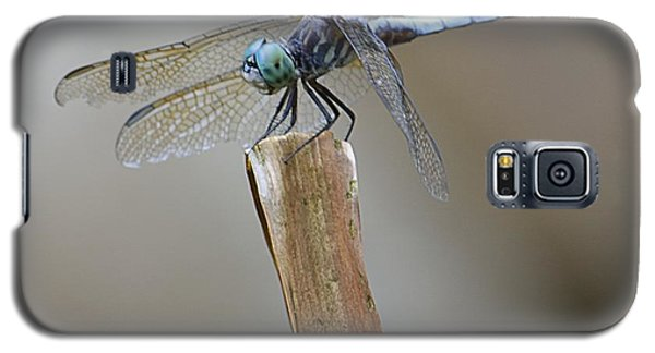 Galaxy S5 Case featuring the photograph Blue Dasher by Randy Bodkins