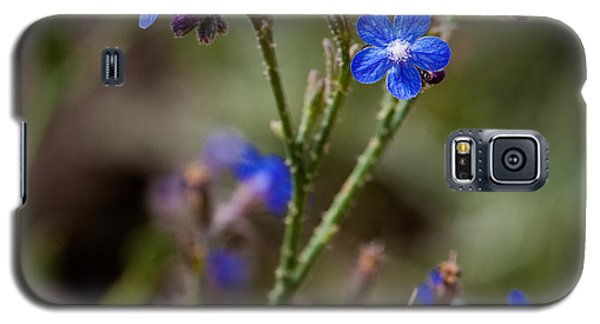 Galaxy S5 Case featuring the photograph Blue Delight by Uri Baruch