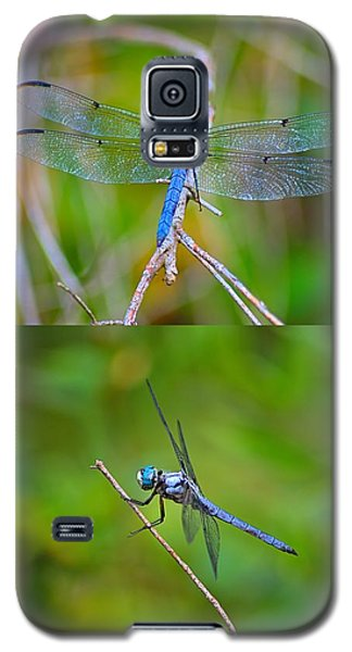 Blue Dragon Fly Galaxy S5 Case