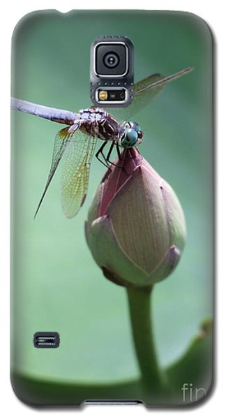 Blue Dragonflies Love Lotus Buds Galaxy S5 Case