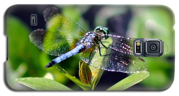 Galaxy S5 Case featuring the photograph Blue Dragonfly Blue Dasher by Jeanne Kay Juhos