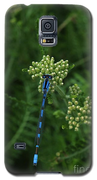 Galaxy S5 Case featuring the photograph Blue Dragonfly by Marjorie Imbeau
