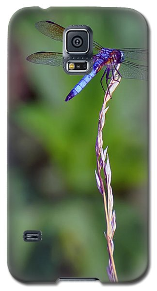 Blue Dragonfly On A Blade Of Grass  Galaxy S5 Case by Chris Flees