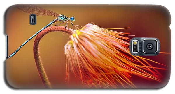 Blue Dragonfly On A Dry Flower Galaxy S5 Case
