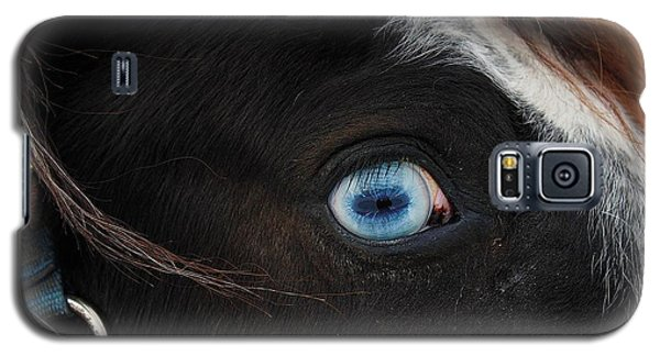 Blue Eyed Horse Galaxy S5 Case