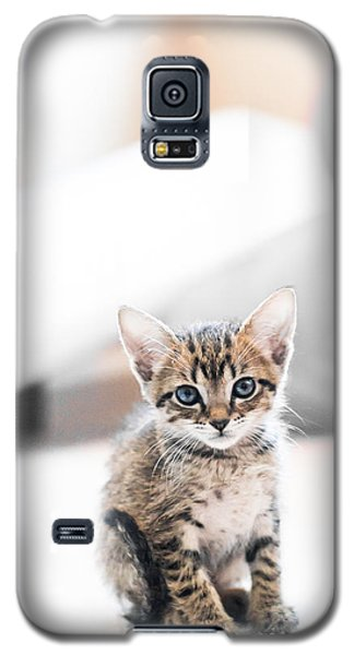 Blue Eyed Kitten Galaxy S5 Case by Shelby  Young