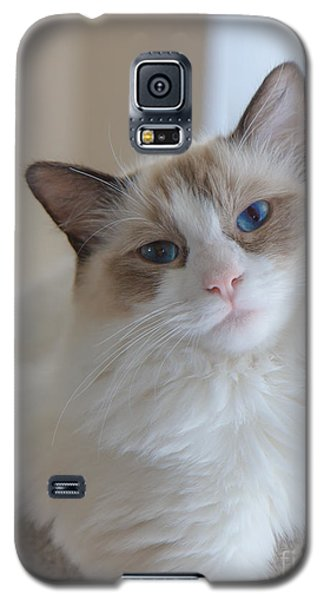 Galaxy S5 Case featuring the photograph Blue-eyed Ragdoll Kitten by Peta Thames