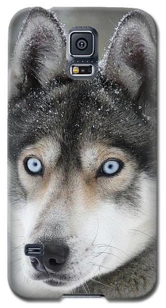 Blue Eyes Husky Dog Galaxy S5 Case