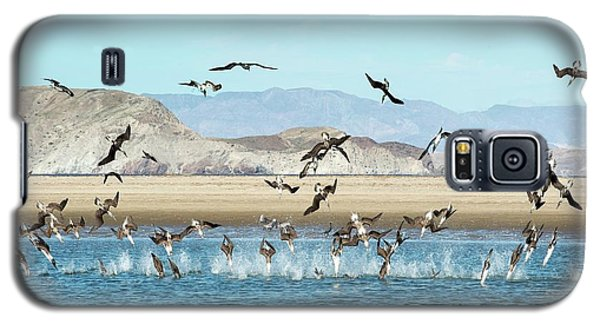Blue-footed Boobies Feeding Galaxy S5 Case