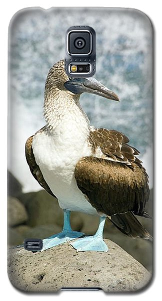 Blue-footed Booby Galaxy S5 Case by Daniel Sambraus
