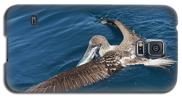Blue-footed Booby Feeding Galaxy S5 Case by Christopher Swann