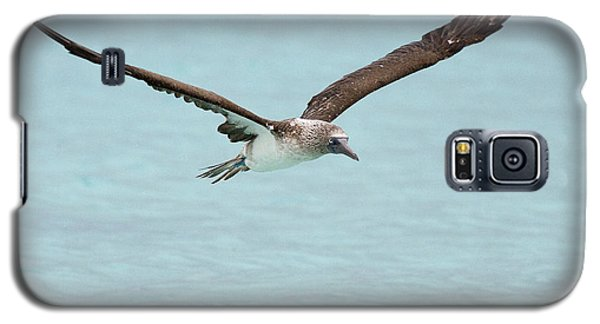Blue-footed Booby In Flight Galaxy S5 Case