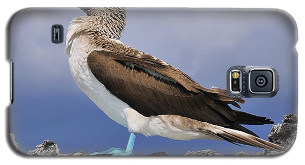 Blue-footed Booby Galaxy S5 Case by Tony Beck