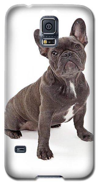 Blue French Bulldog  Galaxy S5 Case