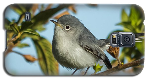 Blue-gray Gnatcatcher Galaxy S5 Case by Jane Luxton