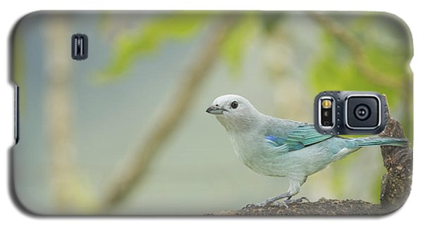 Blue-gray Tanager Galaxy S5 Case