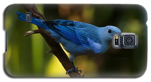 Blue Grey Tanager Galaxy S5 Case by Chris Flees