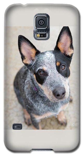 Blue Heeler 1 Galaxy S5 Case by Rebecca Cozart