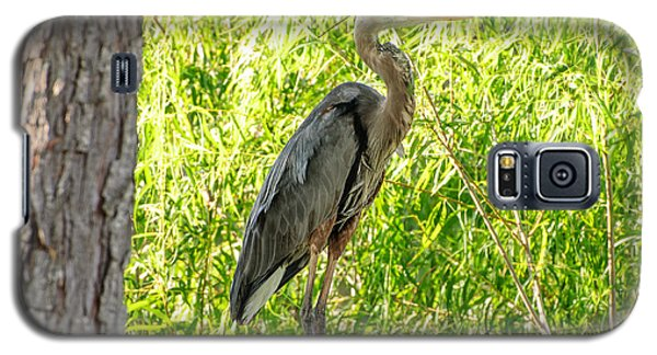 Blue Heron At Rest Galaxy S5 Case