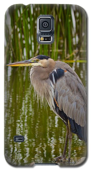 Galaxy S5 Case featuring the photograph Blue Heron by Duncan Selby