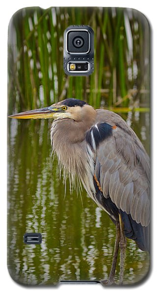 Blue Heron Galaxy S5 Case by Duncan Selby