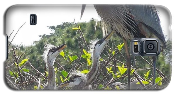 Galaxy S5 Case featuring the photograph Blue Heron Family by Ron Davidson